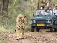 ranthamboresafari